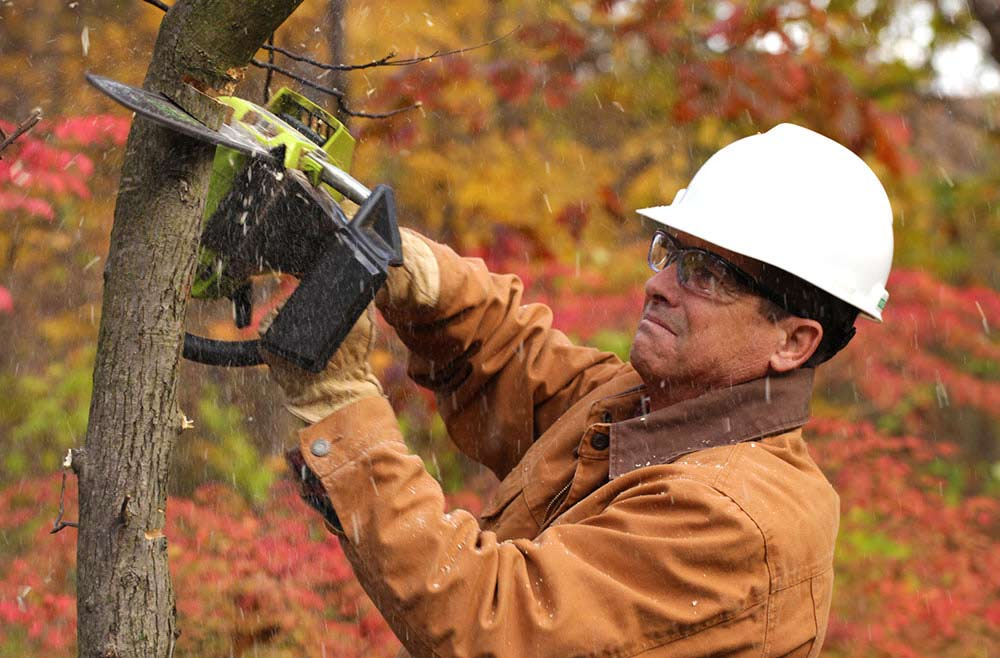 safety eyewear on while cutting down a tree